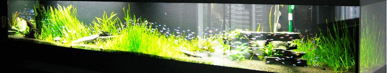 torfgranulat aquarium